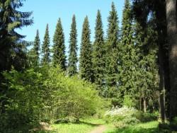 Hrádocké Arborétum Liptovský Hrádok (Liptowski Gródek)