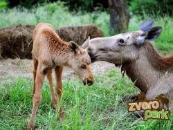 Zwierzę park Žarnovica