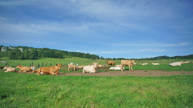 Penzión RANČ F&A&H - Agrofarma #5