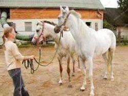 Ranch AMADEUS Blatnica