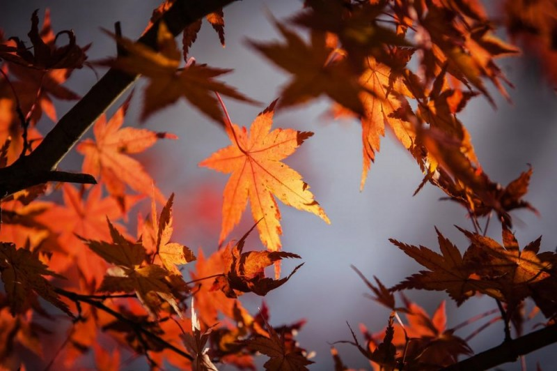 Podzimní pobyt s neomezeným wellness (sauny, vířivka) #1