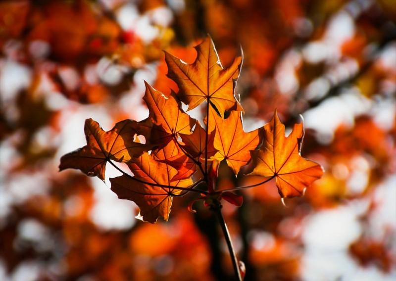 Jeseň na Donovaloch (polpenzia + neobmedzený wellness) #2