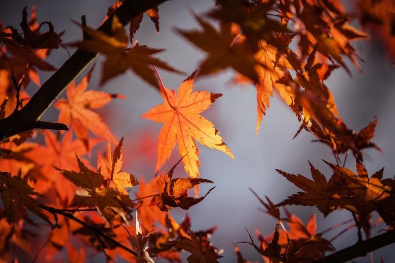 Jesenný pobyt vo Vysokých Tatrách (Vstup do sauny a vírivky, romantická večera) #1