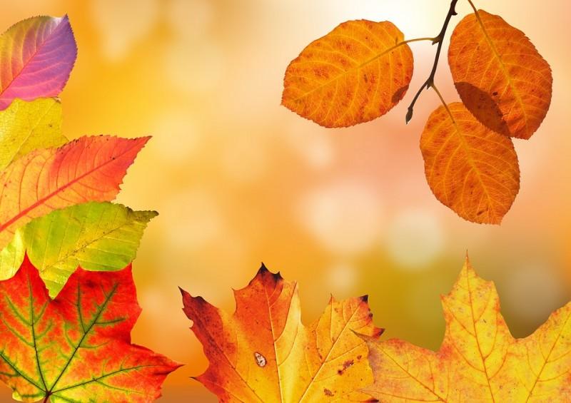 Jesenný pobyt vo Valčianskej doline s neobmedzeným wellness #1