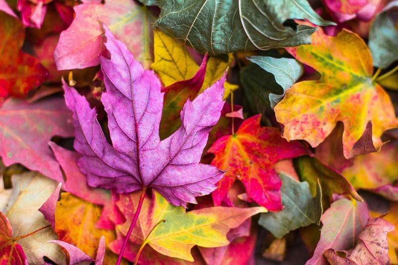 Jesenný pobyt na Šachtičkách #1