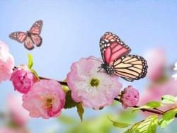 Tavaszi csomagajánlat korlátlan wellnessel és kezelésekkel Bardejovské kúpele (Bártfafürdő)