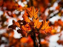 Podzim na Donovalech (polopenze + neomezený wellness) Donovaly