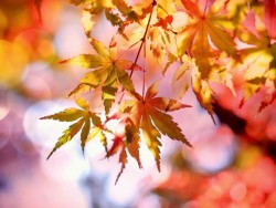 Jesenný pobyt v Nízkych Tatrách so vstupom do wellness a bazénu Liptovský Ján