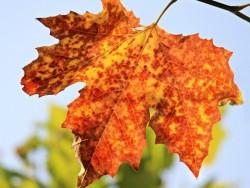 Jesenný pobyt cez týždeň v Tatrách Štôla