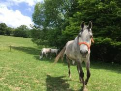 Anima Equus - Jízda na koni Banská Bystrica