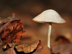 Jeseň v Nízkych Tatrách (Dieťa do 15 rokov ZDARMA) Demänovská Dolina