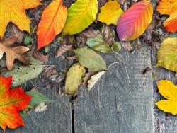 Jesenný pobyt v Nízkych Tatrách cez týždeň s procedúrami, 2. osoba zdarma! Liptovský Ján