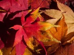 Jesenné prázdniny vo Vysokých Tatrách Horný Smokovec