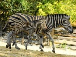 Ogród Zoologiczny Bojnice Bojnice