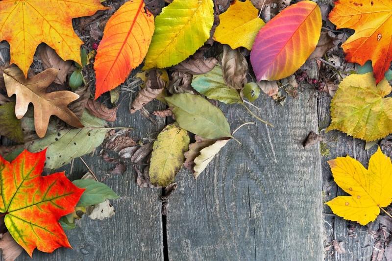 Jesenný pobyt v Nízkych Tatrách cez týždeň s procedúrami, 2. osoba zdarma! #1