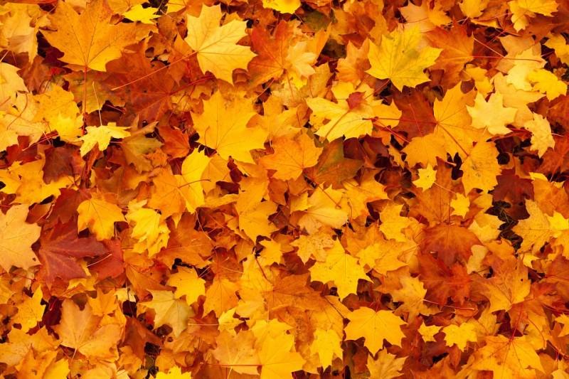Jesenný oddych v Dudinciach s bazénmi a masážou #1