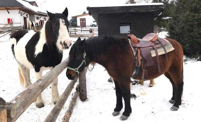 Silvester 2019 v Tatrách so vstupom do wellness a Silvestrovským večerom #7