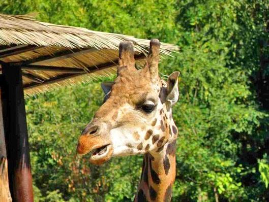 93591625e ZOO Bratislava - Zoologická záhrada - Travelguide.sk